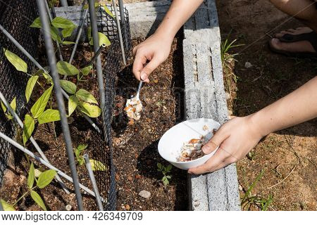 Person Feeding Crushed Egg Shell As Natural Organic Fertilizer To Plants In Garden