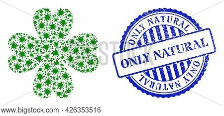 Coronavirus Mosaic Four Leaf Clover Icon, And Grunge Only Natural Seal Stamp. Four Leaf Clover Mosai