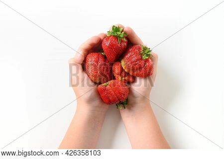Ugly Ripe Organic Strawberry In Child Hands.