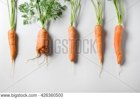Comparison Of Freshly Home-grown Carrots, Regular And Unusual Ugly Shape.