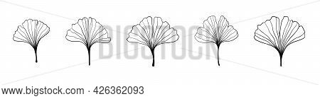 Ginkgo Biloba Black Outline In Sketch Style. Isolated On White Background. Sketch Illustration. Abst