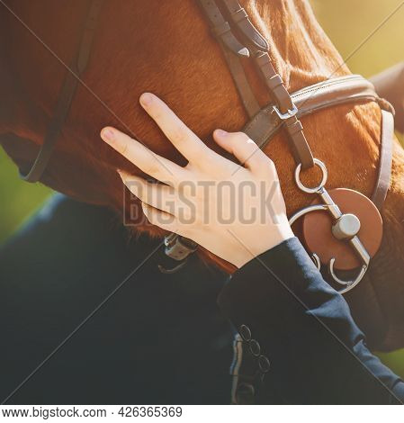 The Gentle Touch Of A Rider's Hand On The Muzzle Of A Sorrel Horse With A Bridle On Its Muzzle On A