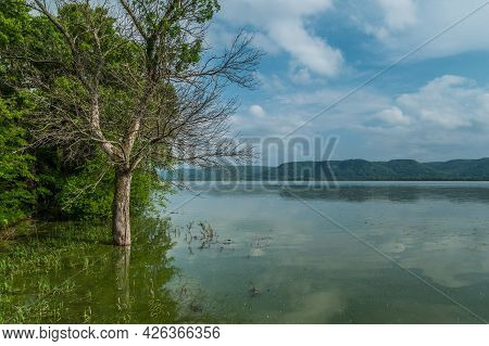 Flooding From Rainfall On The Mississippi River Partially Submerging A Bare Tree And Tall Grasses An