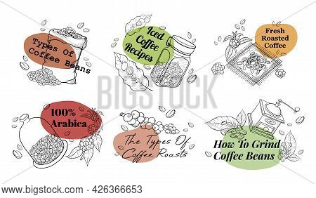 Collection Of Coffee Beans Label Monochrome Engraved Vector Illustration Hand Drawn Roasted Seeds