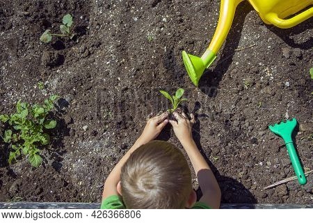 Kids Hands Planting Seedling In Soil. Environment Earth Day. Save Planet Concept. Child Caring Young