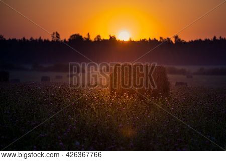 Sun Rising Over The Summer Meadow. Grass Growing In Rural Landscape During Sunrise. Summertime Scene