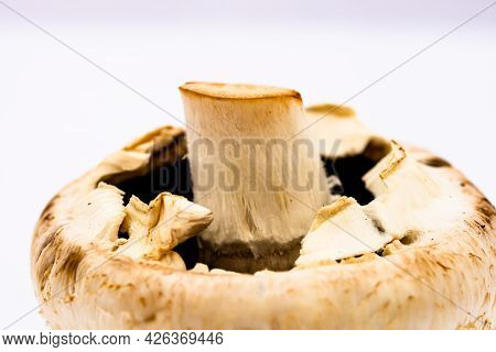 Fresh Champignons, Champignon Mushrooms, Close-up, Isolated On White