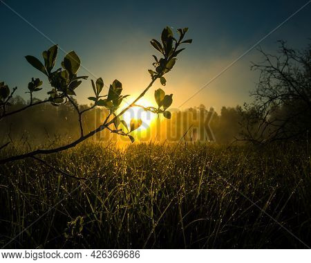 A Beautiful Summer Sunrise Behind The Trees. Tree Sihouette Against The Sunrise Sky. Summertime Scen