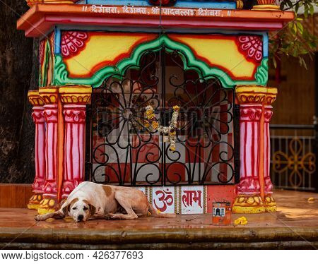 Chapora, North Goa, India , 26 March 2016 Sad Homeless Dog Lies On The Altar