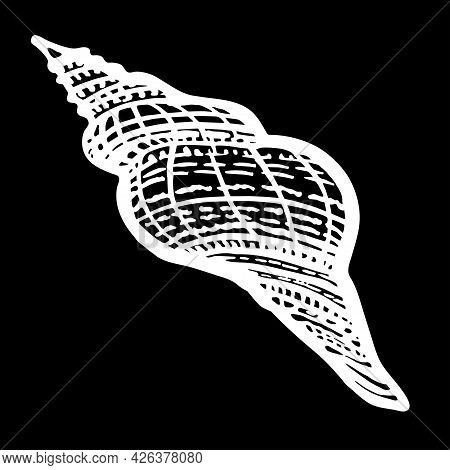 Black And White Hand Drawn Curled Seashell In Wild Style Of Ink Line On Black. Doodle Freehand Sketc