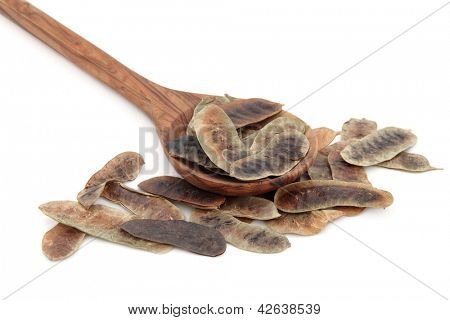 Senna fruit pods in an olive wood spoon over white background.