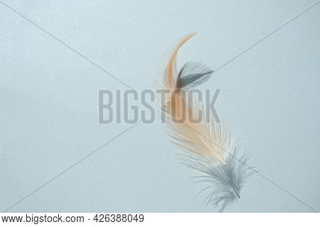 Feather Fluffy Brown Nature With Dark Shadow On Blue Paper Background. Flat Lay And Free Space. Tend