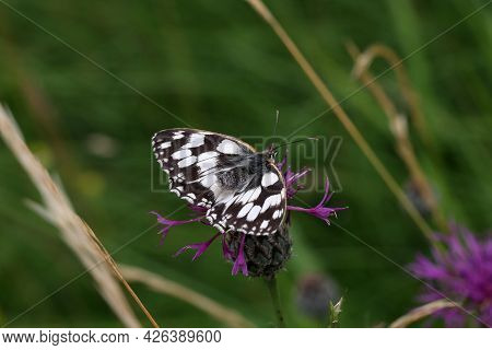 Beautiful Butterflies Sit On Flowers And Drink Nectar.