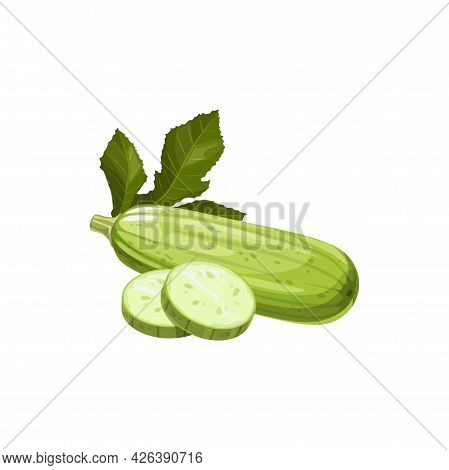 Fresh Squash Vegetable Marrow Vector Natural Plant, Healthy Food Isolated Cartoon Element For Design