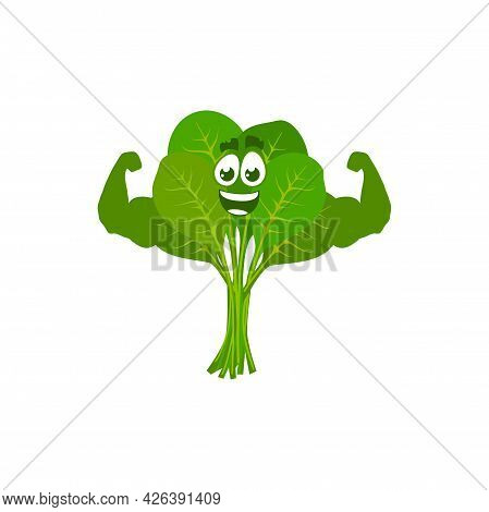Cartoon Spinach Sportsman Demonstrate Power, Vector Funny Green Vegetable Show Muscles. Bodybuilding