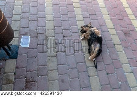 A Small Dog Funny Lying Down With Its Paws Up And Sleeping On The Sidewalk Near The Trash Can Of A S