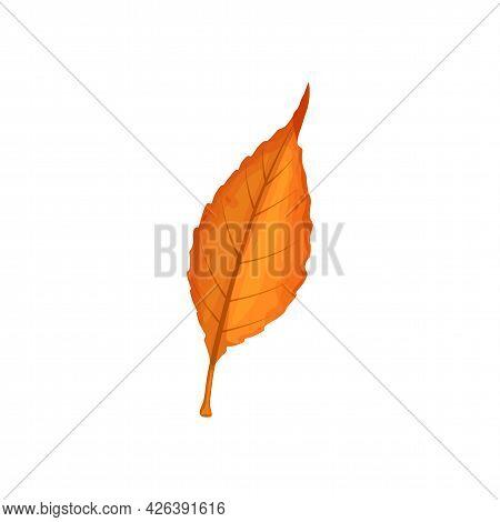 Autumn Leaf Vector Icon, Cartoon Foliage, Fallen Tree Leaf Of Orange Color, Design Element Isolated