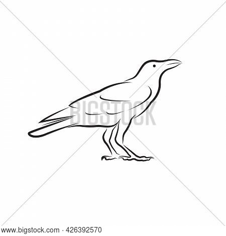 Vector Of Crow Design Isolated On White Background. Easy Editable Layered Vector Illustration. Wild
