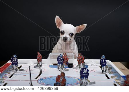Moscow, Russia. 22-06-2021. A Small Chihuahua Dog Sits At A Hockey Board Game Of Hockey Where Metal