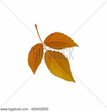 Autumn Leaf, Autumn Tree Foliage, Vector Dry Orange Brown Leaves Isolated Icon. Autumn Leaf Of Ash O