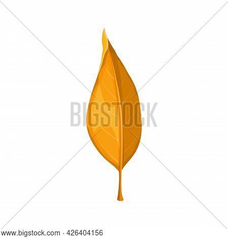 Autumn Leaf Vector Icon, Cartoon Foliage, Fallen Tree Leaf Of Orange Color, Botanical Design Element