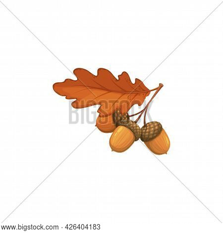 Autumn Oak Acorn With Dry Leaves Vector Icon. Cartoon Fallen Foliage, Dry Tree Seed, Branch And Leaf