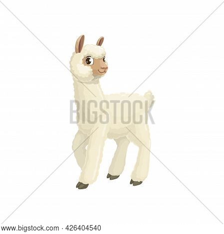 Lama Camelid Mammal With White Wool, Cute Farm Llama Animal Isolated Flat Cartoon Icon. Vector Alpac