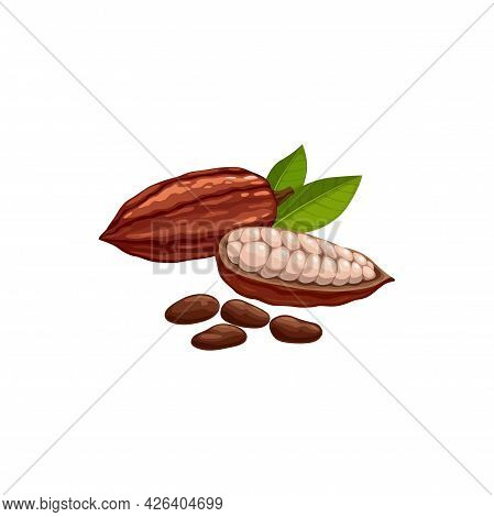 Cocoa Bean Pod In Stage Of Riping Dried And Fermented Seed Of Brazil Or Indonesia Fruit Isolated Ico