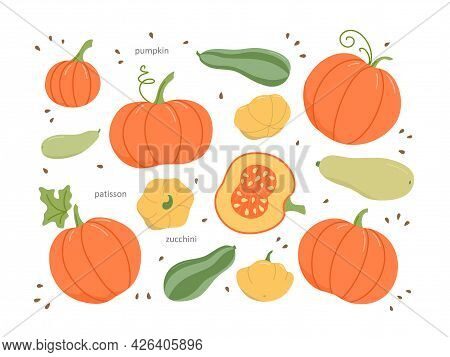 A Set Of Fresh Farm Vegetables. The Set Includes Pumpkins, Zucchini, And Patissons. Flat Cartoon Col