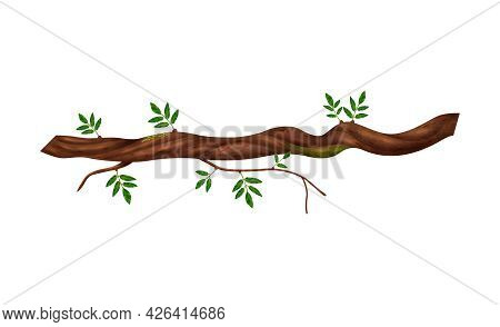 Realistic Twisted Jungle Vine Plant With Green Leaves Vector Illustration