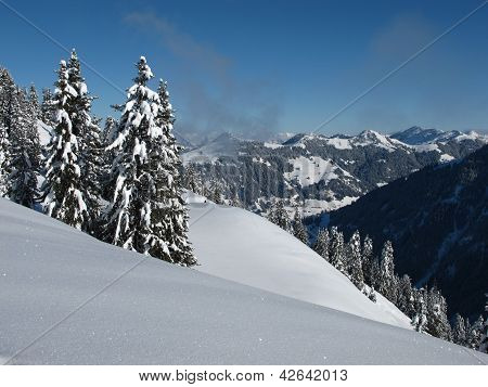Snow covered spruces in the Bernese Oberland. poster