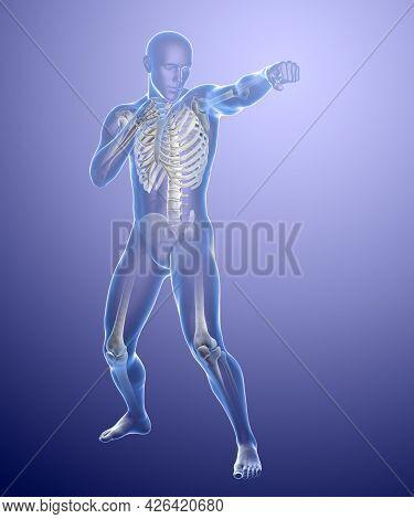 Anatomy Of Boxing Sport, 3D Illustration