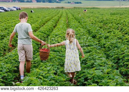 Two Siblings, Preschool Girl And School Boy Having Fun With Picking On Strawberry Farm In Summer. Ch