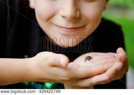 Beautiful School Preteen Kid Boy Holding Small Wild Frog. Happy Curious Child Watching And Exploring