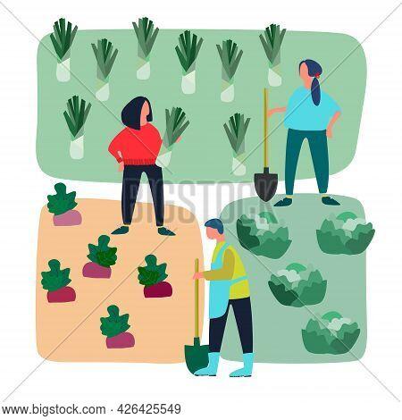 People Doing Agricultural Works On Vegetable Patch. Vector Flat Illustration. Harvesting, Gardening,