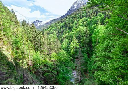 Canyon With Fir Trees . Coniferous Forest In The Alps Mountains  . Evergreen Woodland