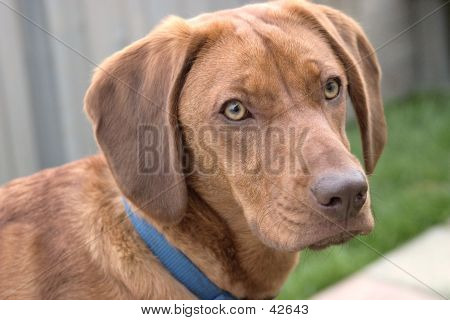 Profile Of Wrigley