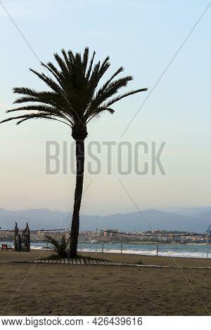 Palm Tree In Urbanova Beach In The Evening, Alicante, Spain. Alicante Coast In The Background