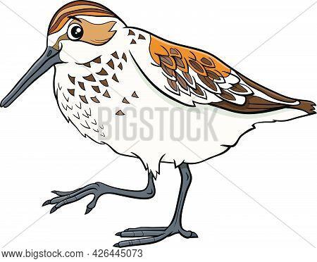 Cartoon Illustration Of Funny Western Sandpiper Bird Comic Animal Character
