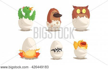 Cute Bird And Reptile Hatching From Egg Sitting In Cracked Open Shell Vector Set