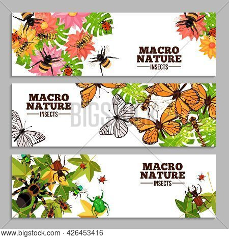 Insects Horizontal Banners Of Wasps Butterflies Bugs Beetles And Others On Flowers And Leaves Doodle