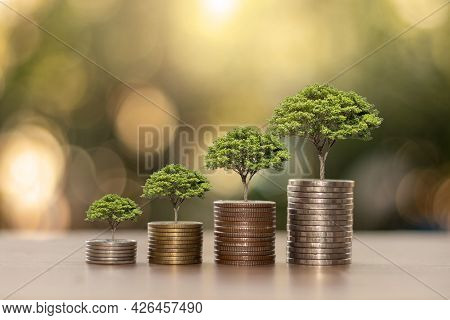 Plants Grow On Piles Of Coins Or Money On The Wooden Floors, The Concept Of Saving Money, Economic G