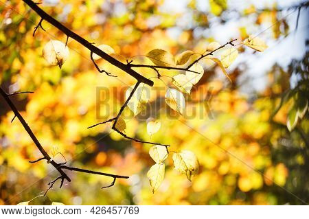 Beautiful Autumn Landscape With Yellow Trees And Sun. Colorful Foliage In The Park. Falling Leaves N