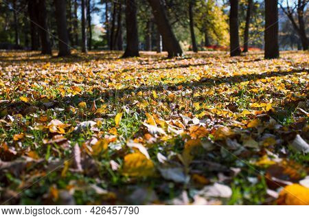 Yellow, Orange And Red Autumn Leaves In Beautiful Fall Park Covering The Ground, Seasonal Background
