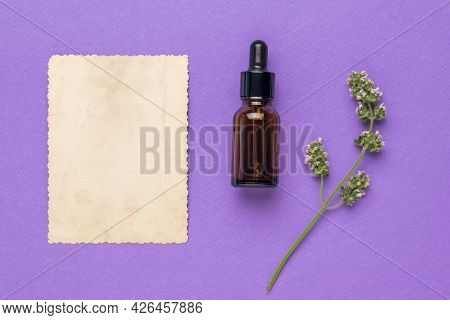 A Sheet Of Paper, A Bottle Of Medicine And A Medicinal Plant On A Purple Background. The Concept Of