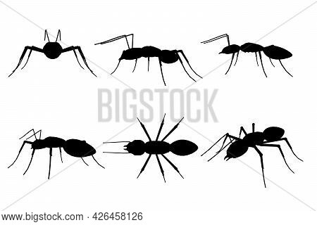 Set With Silhouettes Of Ant In Different Positions Isolated On White Background. Vector Illustration