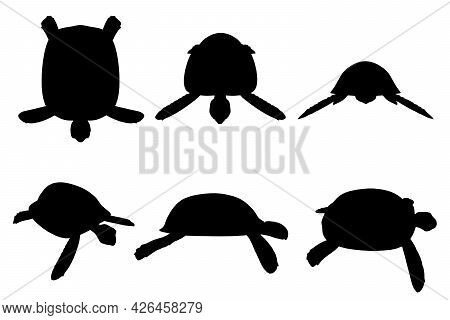 Set With Silhouettes Of A Turtle In Various Positions Isolated On A White Background. Vector Illustr