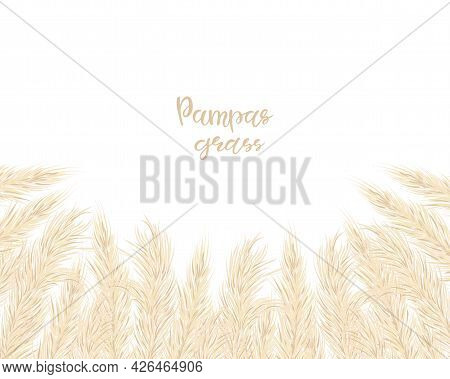 Background With Dry Pampas Grass. Floral Ornamental Elements In Boho Style. Flat Lay With Copy Space