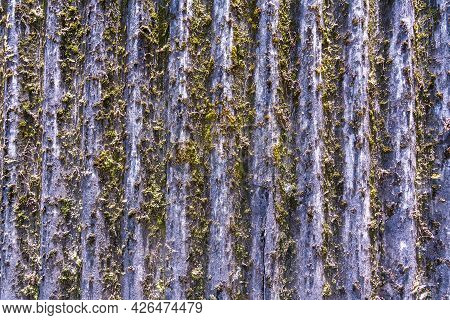 Tiles On The Roof, Overgrown With Moss On The Background Of The Roof.