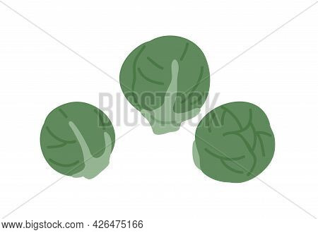 Fresh Raw Whole Brussels Sprouts Composition. Small Round Cabbages. Healthy Vegetarian Food. Flat Ve